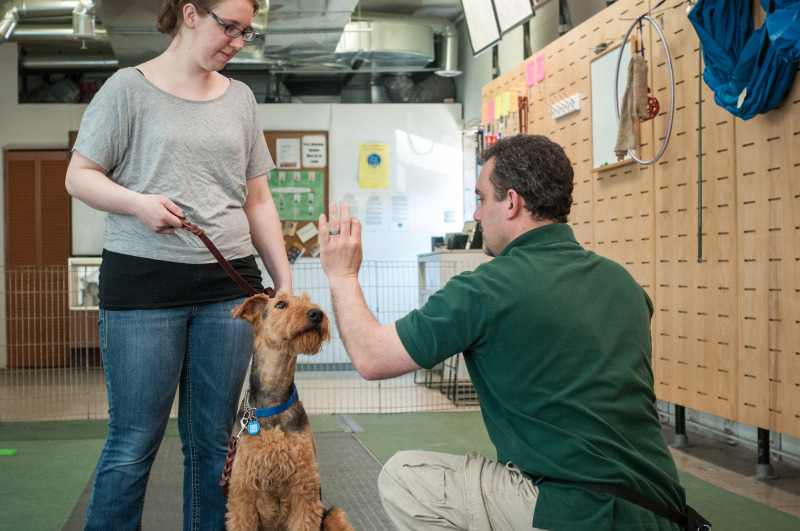 Canine Resolution Private Lessons