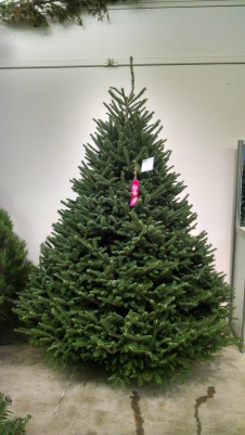 Christmas Tree Types.Christmas Tree Varieties Available Christmas Tree Types