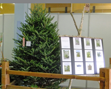 Planting To Harvest Life Cycle Of A Fraser Fir