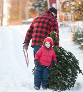 home cut your own christmas trees christmas tree farm somerset wi - Cut Your Own Christmas Tree Farm
