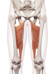 Physical Therapy for Hip Pain in Denver, CO 80203 - Hip Adductor image