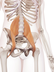 Physical Therapy for Hip Pain in Denver, CO 80203 - (Hip flexor imaage)