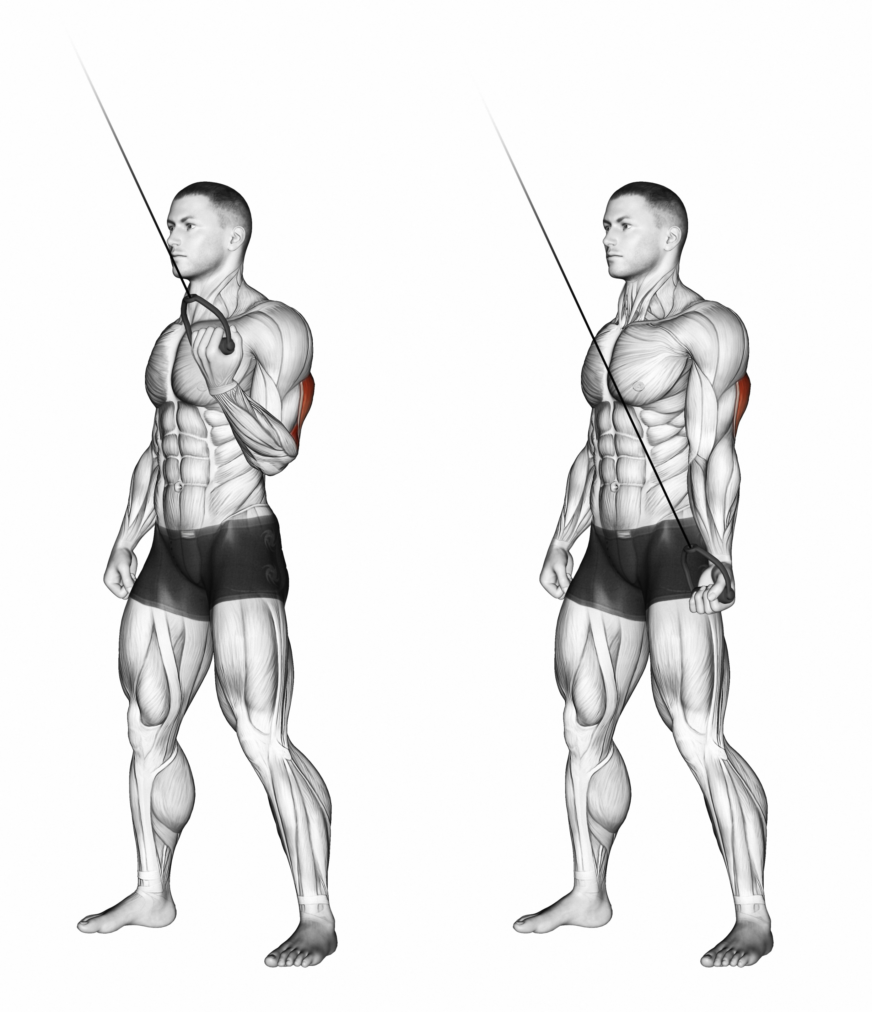 Tricep Series - Level 3 (Standing Tricep Pull Downs at Cables)